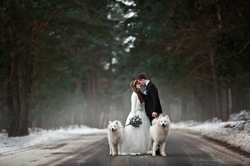Winterhochzeit Fotoshooting mit Hunden